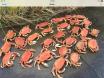 Arima Crabbing