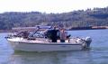 Columbia River hogline - off Longview