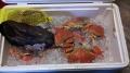 11/29-11/30 crabbing/clamming