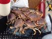 Mission Bar Crab 7-3-14