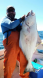 Rockpile halibut 9.5.15