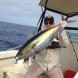 Another Yellowfin Tuna