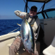 Yellowfin2