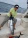 Tuna off San Diego