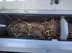 crabbing 2 10/29/16